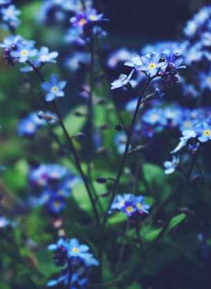 close up photo of blue flowers